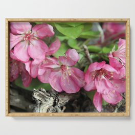 Pink Crab Apple Tree Blossoms Serving Tray