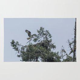 Osprey Reinforcing Its Nest 2017 Rug