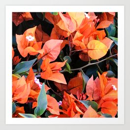 Vibrant Tangerine And Cantaloupe-Colored Flowers Art Print