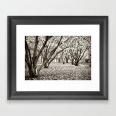 Magnolias in Black & White Framed Art Print