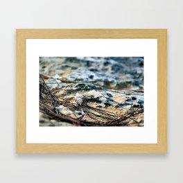Hermie Framed Art Print