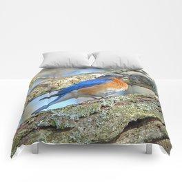 Bluebird in Tree Comforters