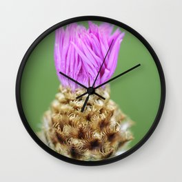 Knapweed Thistle Wall Clock