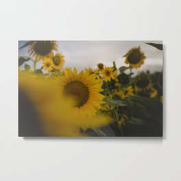 Happy Field Metal Print