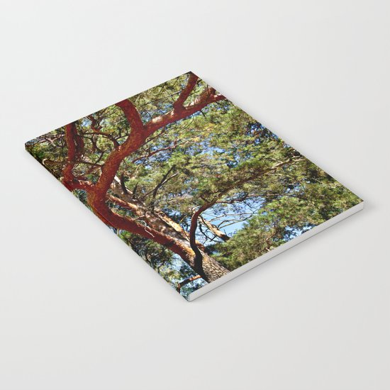Autumnal lure of the forest Notebook