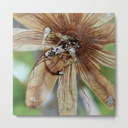 Vintage Vanilla Passion Flower Detail Metal Print