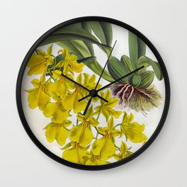 Little Yellow Vintage Orchids Lindenia Collection Wall Clock