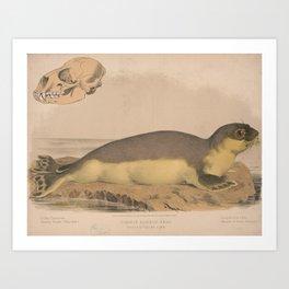 Vintage Illustration of a Harbor Seal (1874) Art Print