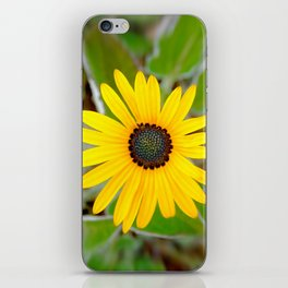 Captured Sun iPhone Skin