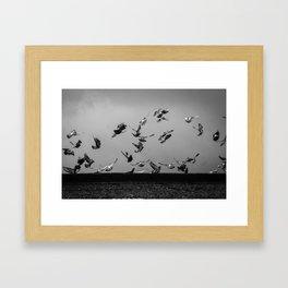 Birds  Framed Art Print