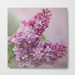 Lilac Florette Metal Print