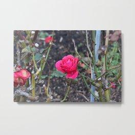Bright Hot Pink Rose Metal Print