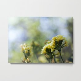 The Color of Summer Metal Print