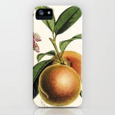 A peach plant - vintage illustration iPhone SE Slim Case