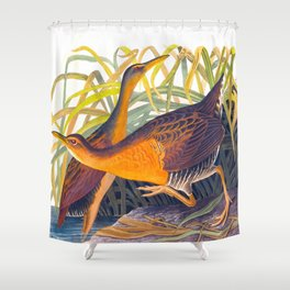 Great Red Breasted Rail John James Audubon Scientific Birds Of America Illustration Shower Curtain
