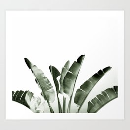 Traveler palm Art Print
