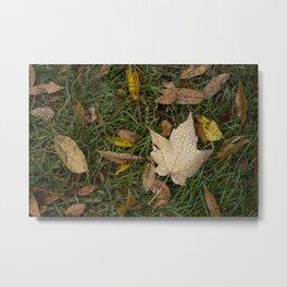 Droplets on the Maple Leaf Metal Print