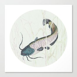 wels catfish Canvas Print