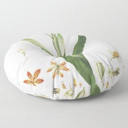 Plantae Selectae No 52-Ixia or Corn Lily by Georg Dionysius Ehret Floor Pillow