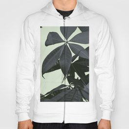 Pachira Aquatica #3 #foliage #decor #art #society6 Hoody
