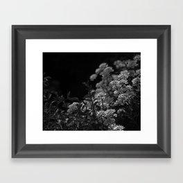 Edelweiss by Moonlight Framed Art Print