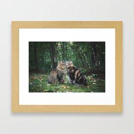 Mainecoon Twins Framed Art Print