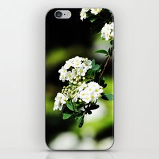 Found in the Bushes iPhone & iPod Skin