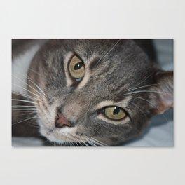 Jumpy the Cat Canvas Print