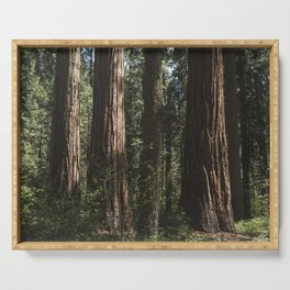 Sunlit California Redwood Forests Serving Tray