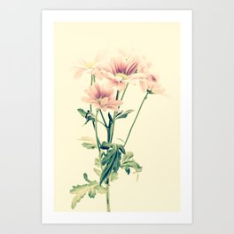Vintage Chrysanthemum Flowers Art Print