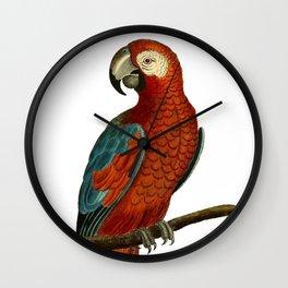 Parrot perroquet Wall Clock