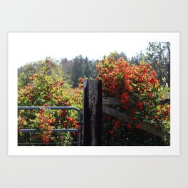 Country Autumn Gate Art Print