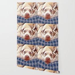 The French Bulldog Wallpaper