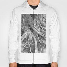 Tree Roots Hoody