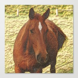 Painted brown Horse Canvas Print
