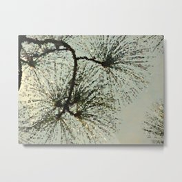 Light in the Pine -- Abstract Botanical Long Leaf Pine  Metal Print