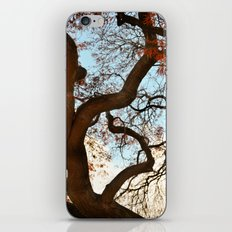 Purple Japanese Maple iPhone & iPod Skin