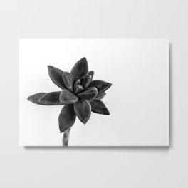 flower cactus Metal Print