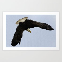 The Descent - Bald Eagle Wildlife Art Art Print