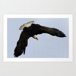 The Descent - Bald Eagle Wildlife Art Art Print