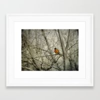 robin Framed Art Prints featuring Robin by Dorothy Pinder