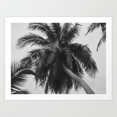 Palm Trees in Paradise Art Print