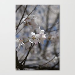 Ivory No. 03 Canvas Print
