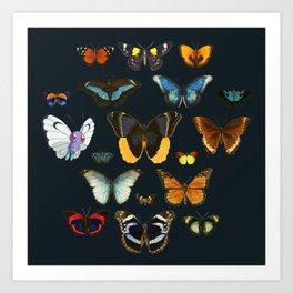 Entomology Vintage Butterfly Art Print