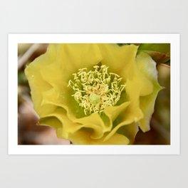 Prickly Pear cactus flower Art Print