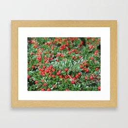 Red Berries Framed Art Print