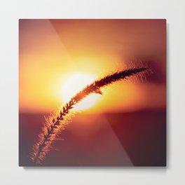 Single, Elegant Pussy Willow In Sunset's Glow Metal Print