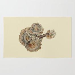 Polyporus versicolor Rug