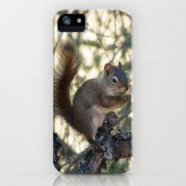 Soldotna Red Squirrel iPhone Case