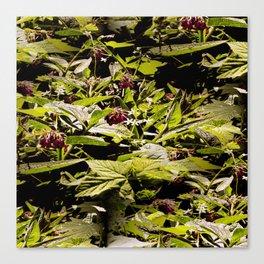 Wild Comfrey & Blackberries.... Canvas Print